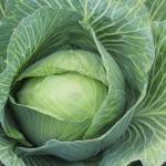 Dieta kapuściana – przepis, opinie, efekty, jadłospis
