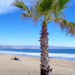 Dieta South Beach – zasady, przepisy, opinie, jadłospis